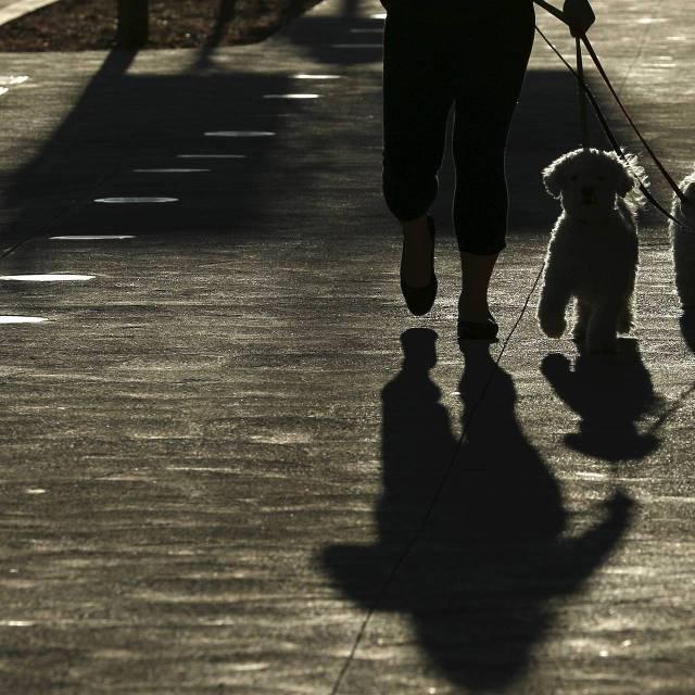 Vrouw laat haar honden uit. (Foto Reuters)