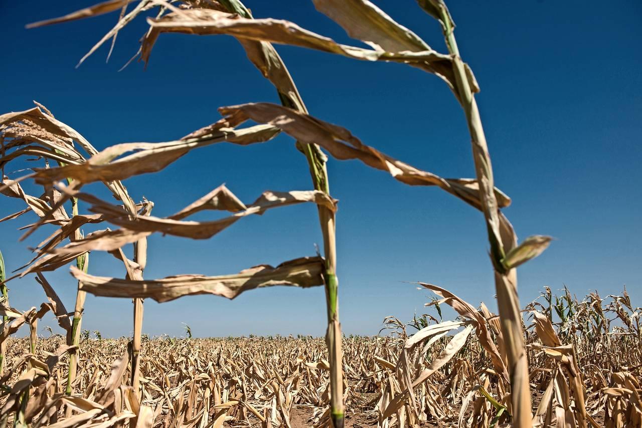 Afbeeldingsresultaat voor boeren zuidafrika