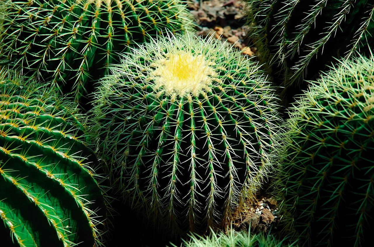 De comeback van de cactus het financieele dagblad for Cactus exterieur resistant au froid